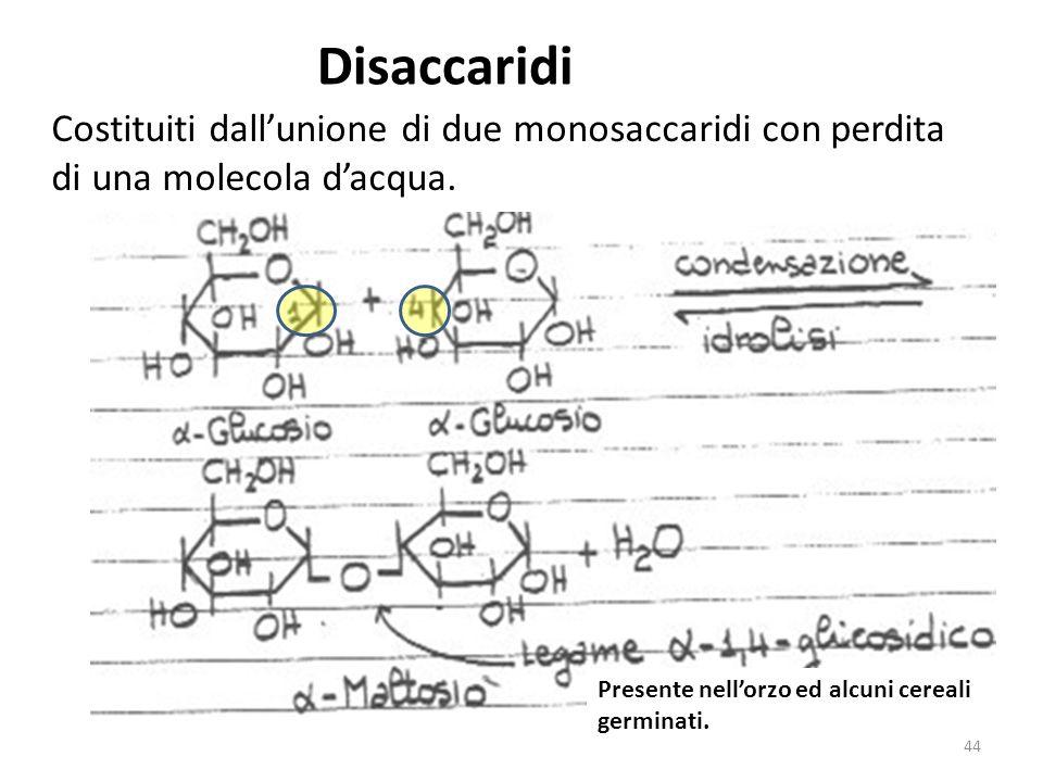 Disaccaridi Costituiti dall'unione di due monosaccaridi con perdita di una molecola d'acqua.