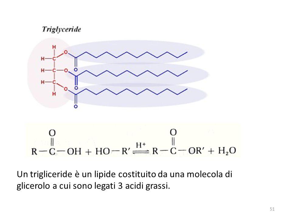 Un trigliceride è un lipide costituito da una molecola di glicerolo a cui sono legati 3 acidi grassi.