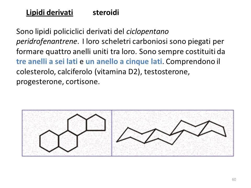 Lipidi derivati steroidi.