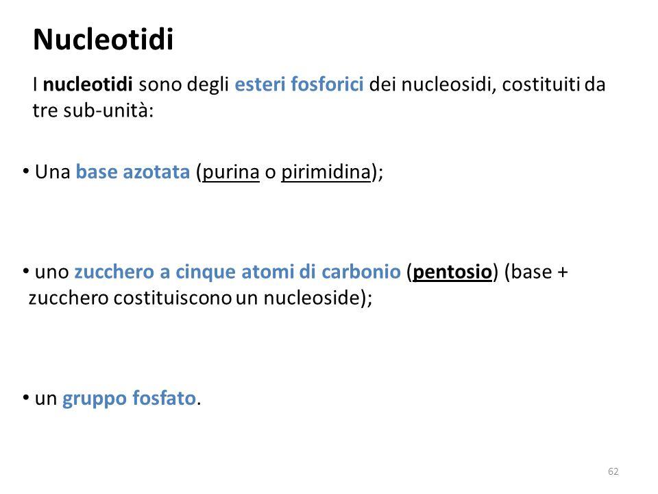 Nucleotidi I nucleotidi sono degli esteri fosforici dei nucleosidi, costituiti da tre sub-unità: Una base azotata (purina o pirimidina);