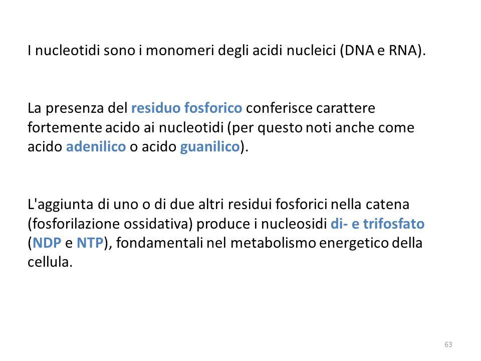 I nucleotidi sono i monomeri degli acidi nucleici (DNA e RNA).