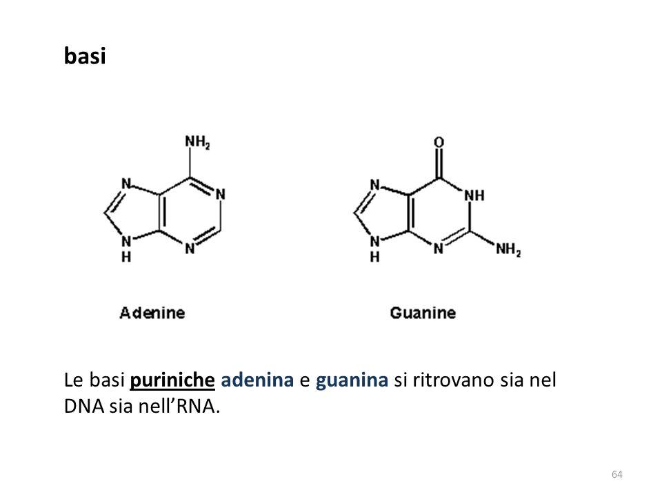 basi Le basi puriniche adenina e guanina si ritrovano sia nel DNA sia nell'RNA.