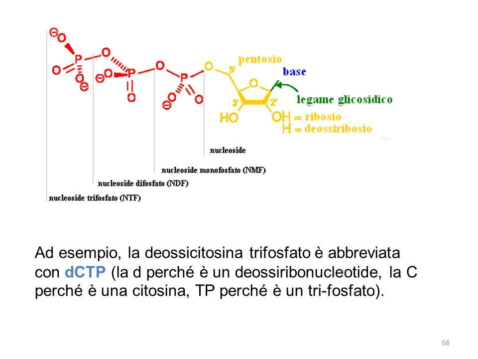 Ad esempio, la deossicitosina trifosfato è abbreviata con dCTP (la d perché è un deossiribonucleotide, la C perché è una citosina, TP perché è un tri-fosfato).