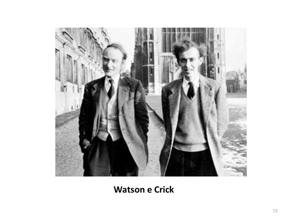 Watson e Crick
