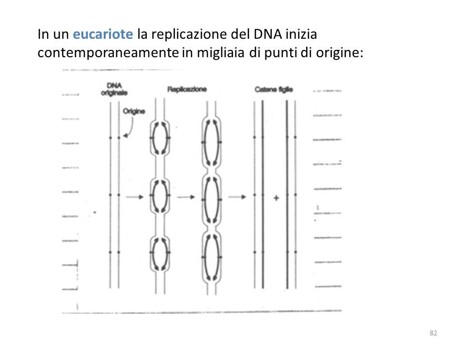 In un eucariote la replicazione del DNA inizia contemporaneamente in migliaia di punti di origine: