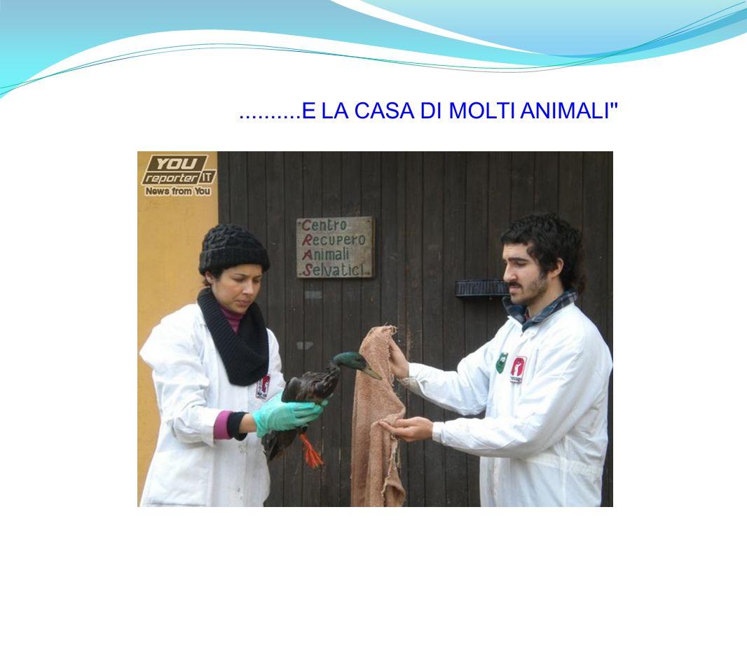 ..........E LA CASA DI MOLTI ANIMALI