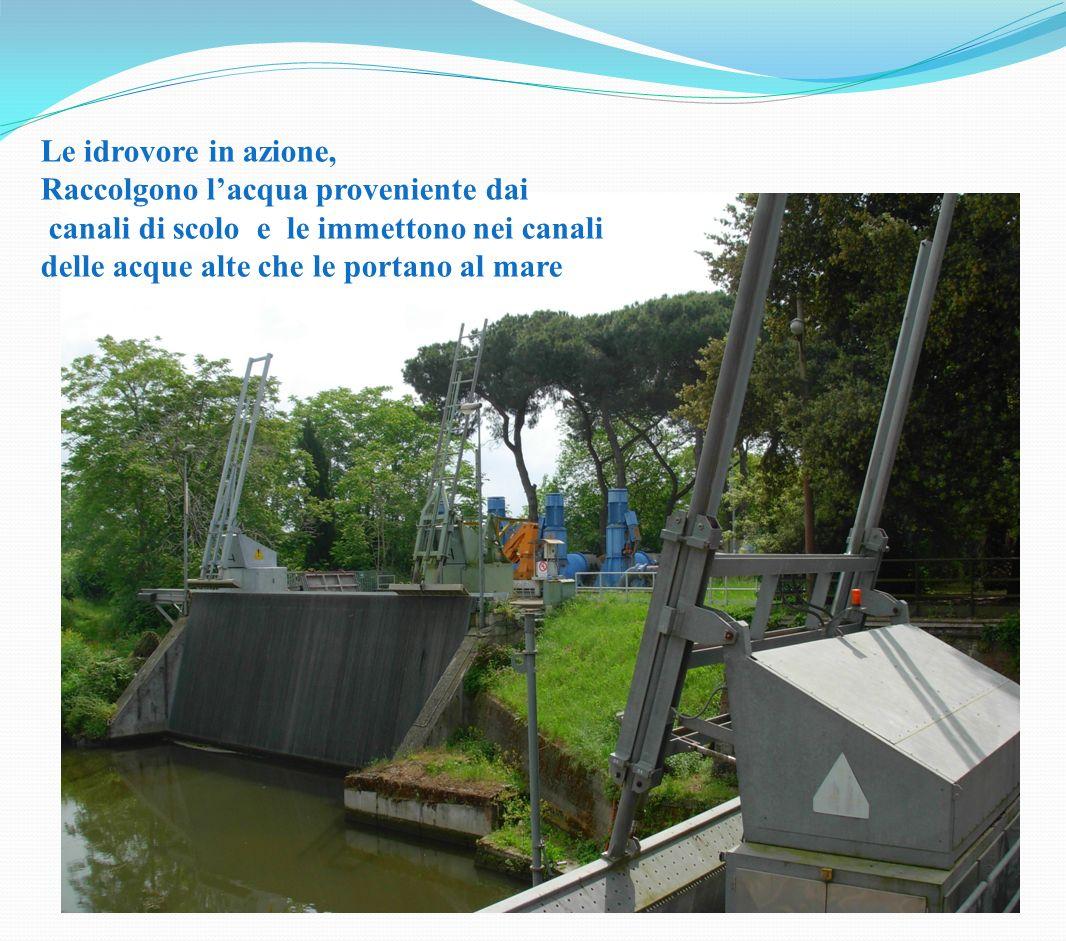 Le idrovore in azione, Raccolgono l'acqua proveniente dai.