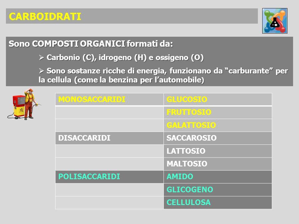 CARBOIDRATI Sono COMPOSTI ORGANICI formati da:
