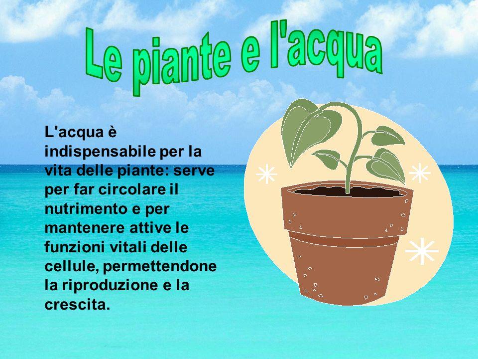 Le piante e l acqua