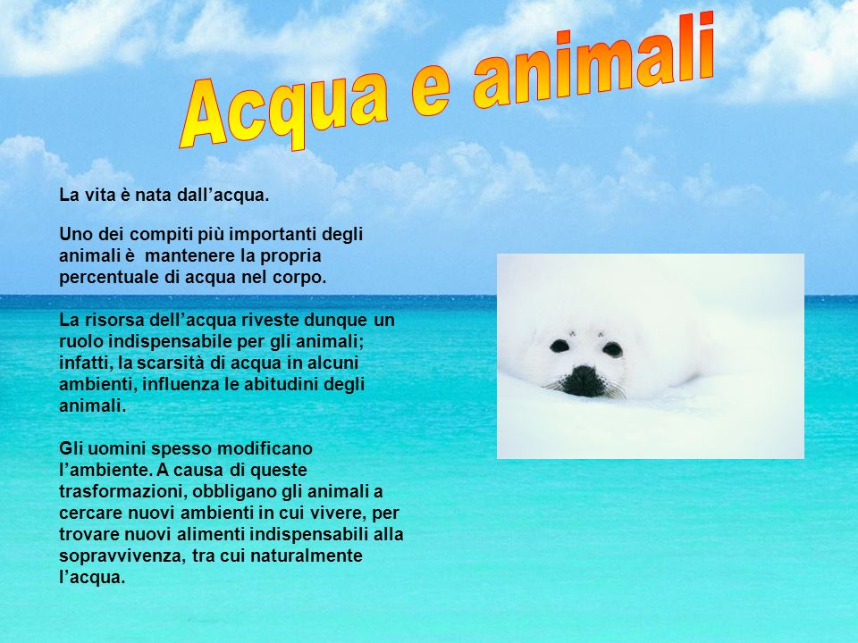 Acqua e animali La vita è nata dall'acqua.