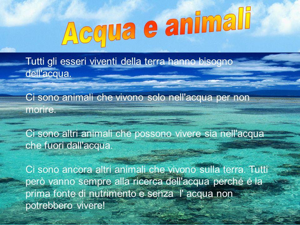 Acqua e animali Tutti gli esseri viventi della terra hanno bisogno dell acqua. Ci sono animali che vivono solo nell acqua per non morire.