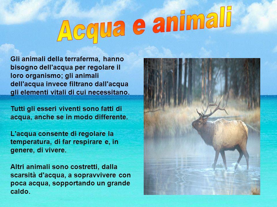 Acqua e animali