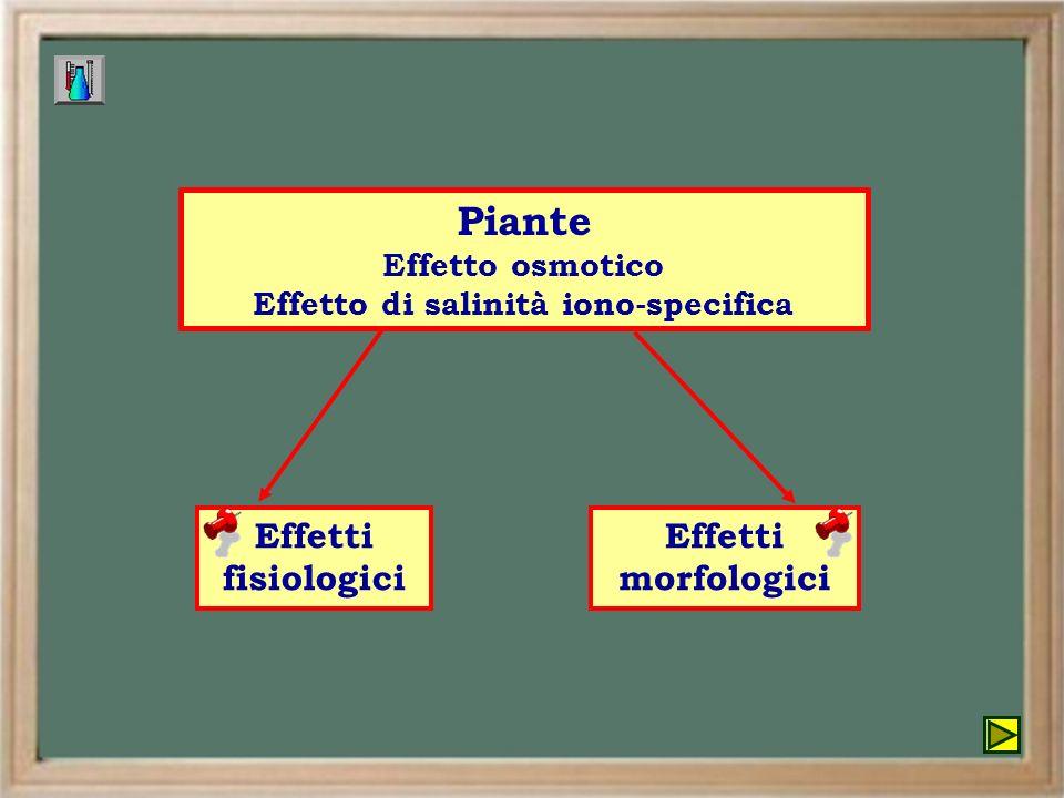 Effetto di salinità iono-specifica