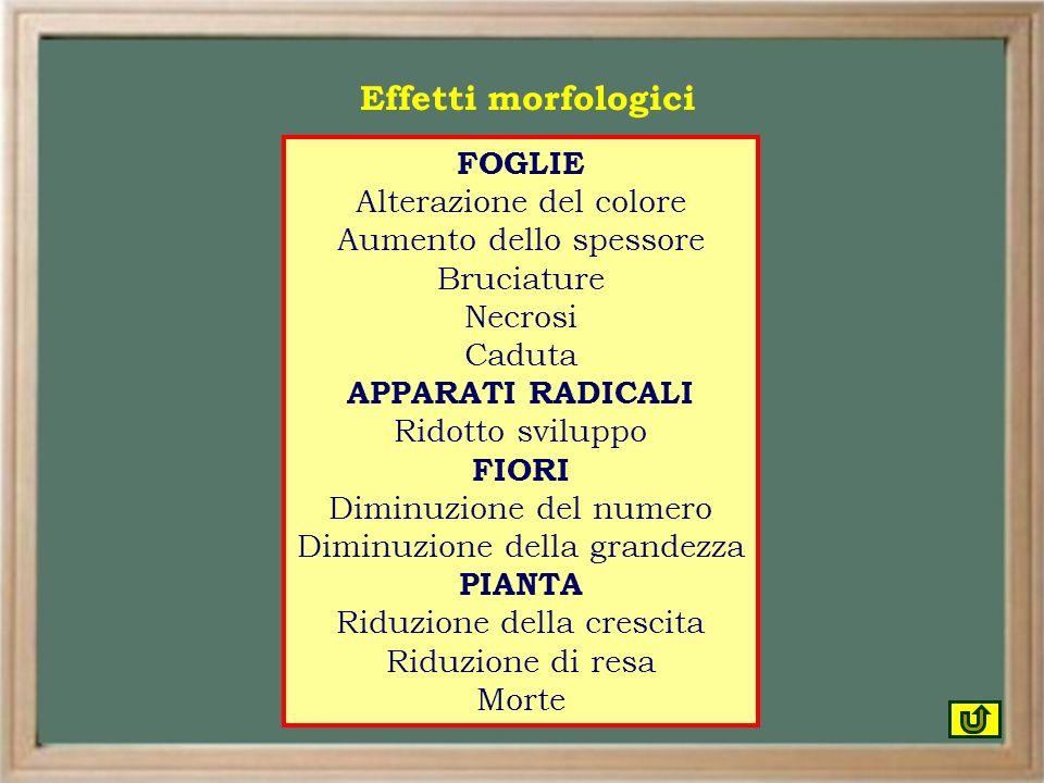 Effetti morfologici FOGLIE Alterazione del colore
