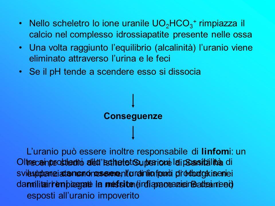 Nello scheletro lo ione uranile UO2HCO3+ rimpiazza il calcio nel complesso idrossiapatite presente nelle ossa