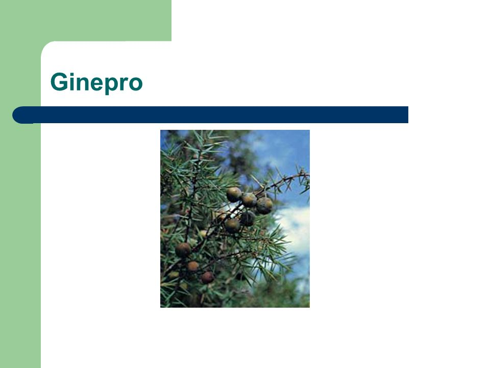 Ginepro