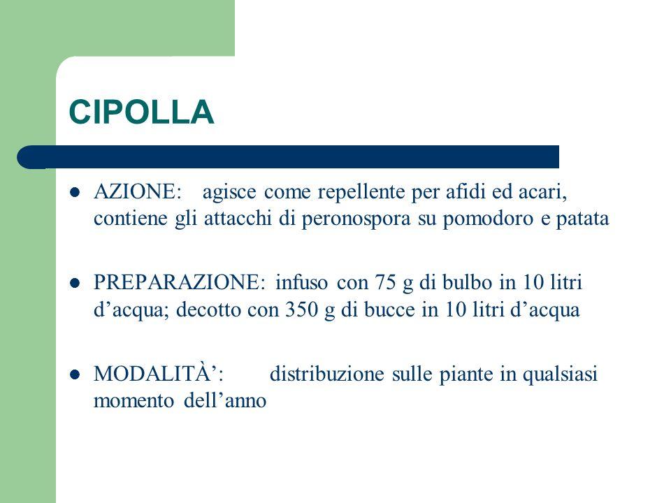 CIPOLLA AZIONE: agisce come repellente per afidi ed acari, contiene gli attacchi di peronospora su pomodoro e patata.