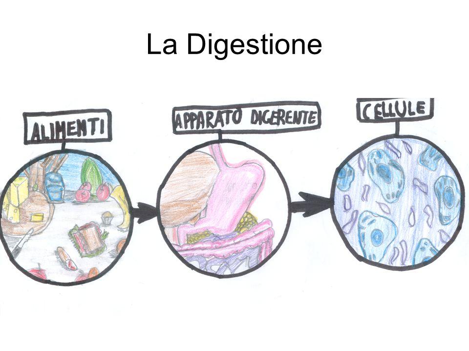 La Digestione