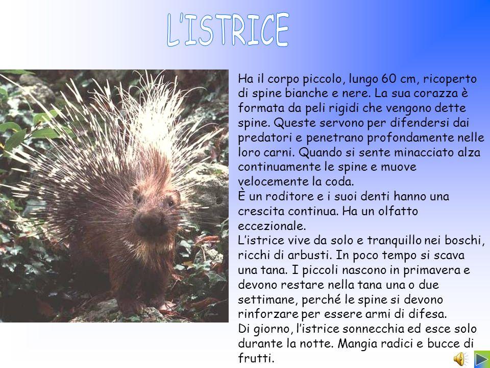 L'ISTRICE