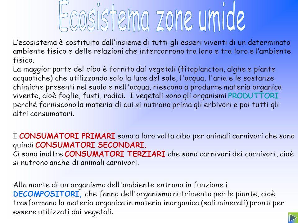 Ecosistema zone umide