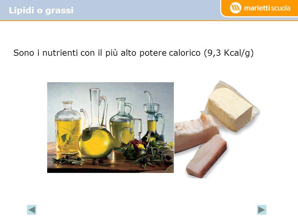 Lipidi o grassi Sono i nutrienti con il più alto potere calorico (9,3 Kcal/g)