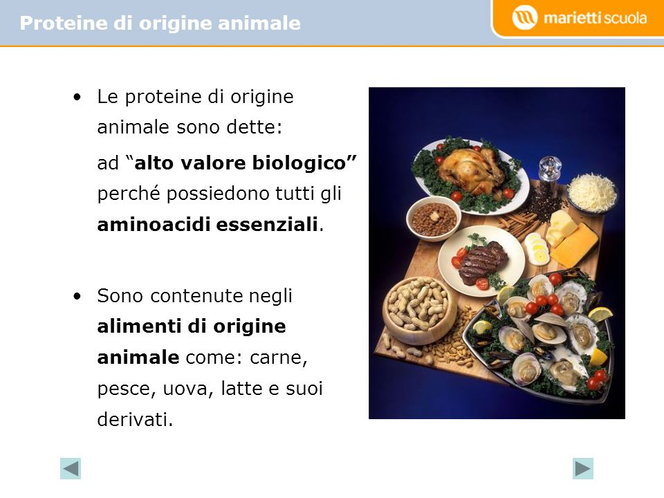 Proteine di origine animale