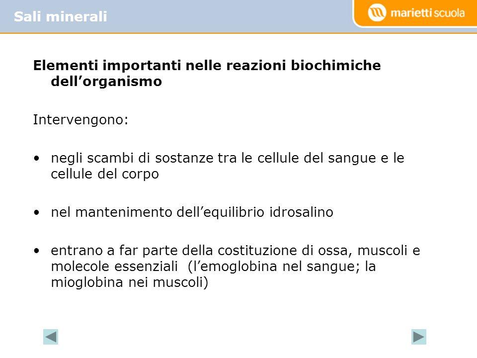 Sali minerali Elementi importanti nelle reazioni biochimiche dell'organismo. Intervengono: