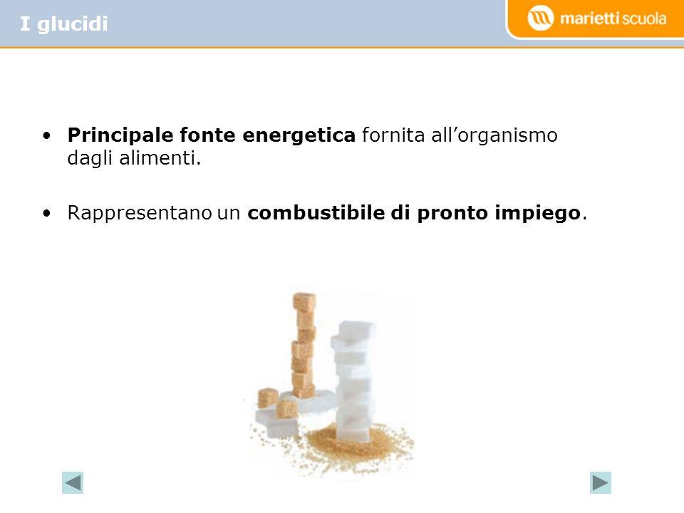 I glucidi Principale fonte energetica fornita all'organismo dagli alimenti.