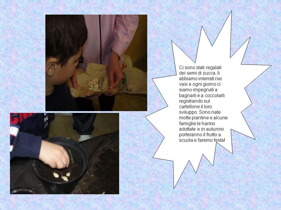 Ci sono stati regalati dei semi di zucca, li abbiamo interrati nei vasi e ogni giorno ci siamo impegnati a bagnarli e a coccolarli registrando sul cartellone il loro sviluppo.