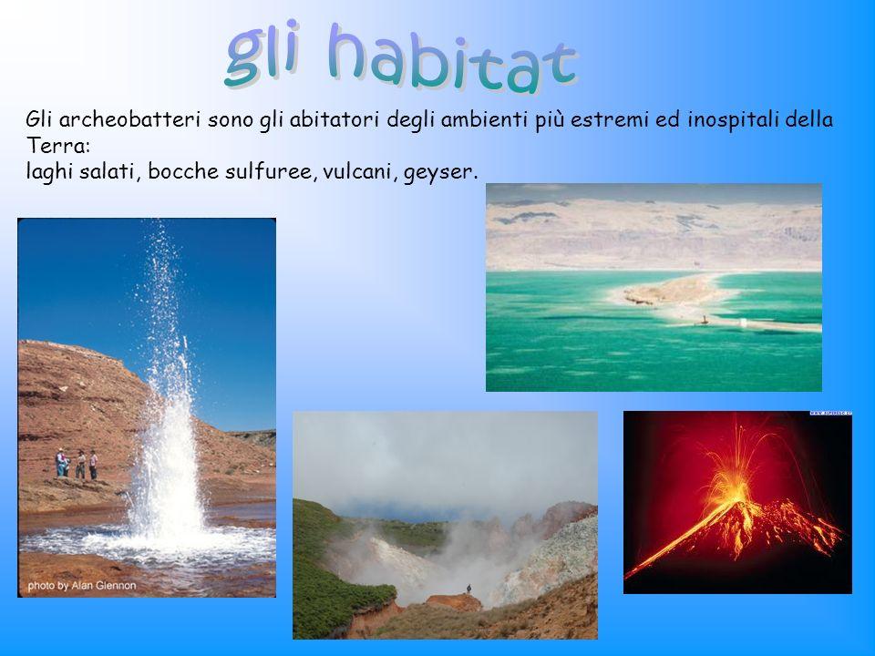 gli habitatGli archeobatteri sono gli abitatori degli ambienti più estremi ed inospitali della Terra: