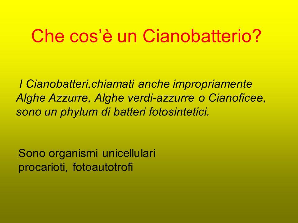 Che cos'è un Cianobatterio