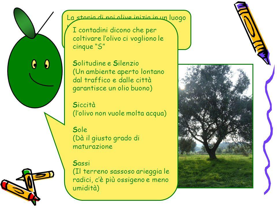 La storia di noi olive inizia in un luogo un pò magico, chiamato oliveto.