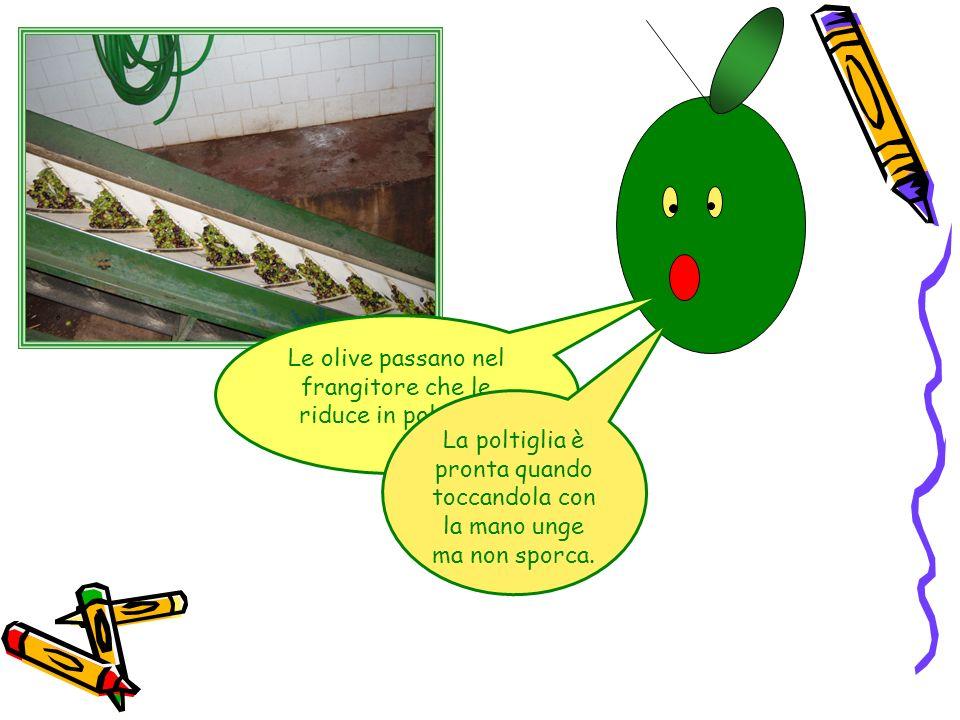 Le olive passano nel frangitore che le riduce in poltiglia