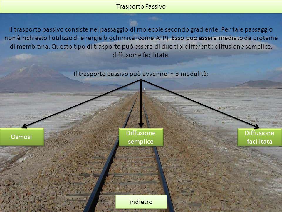 Il trasporto passivo può avvenire in 3 modalità: