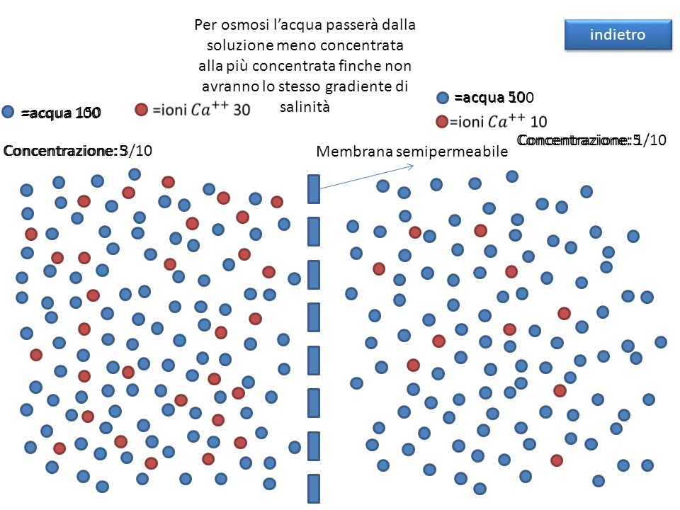 Per osmosi l'acqua passerà dalla soluzione meno concentrata alla più concentrata finche non avranno lo stesso gradiente di salinità