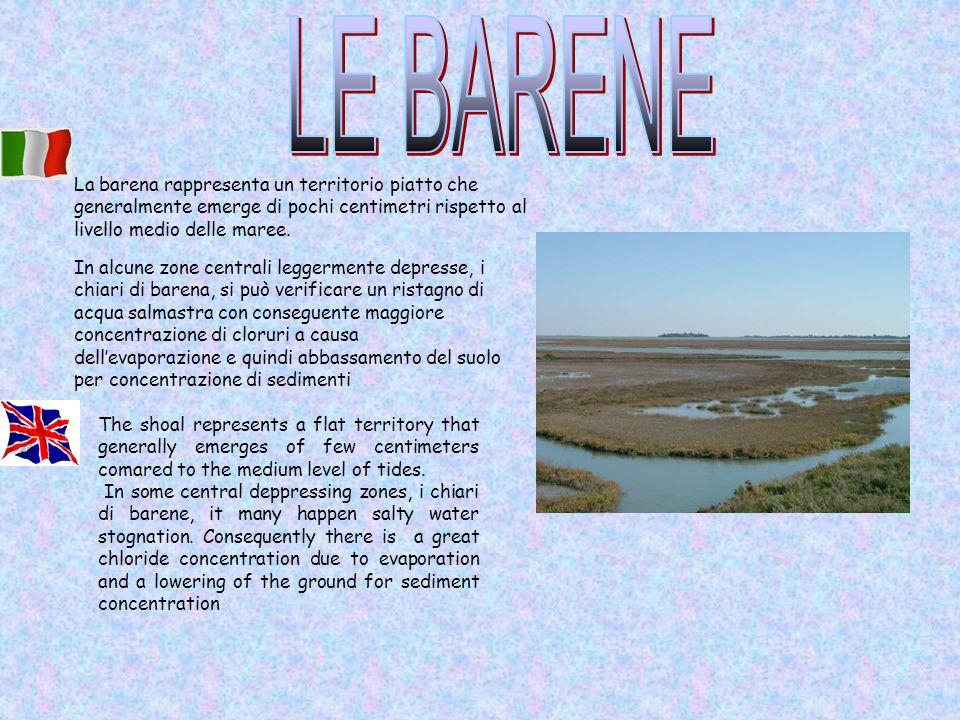 LE BARENE La barena rappresenta un territorio piatto che generalmente emerge di pochi centimetri rispetto al livello medio delle maree.