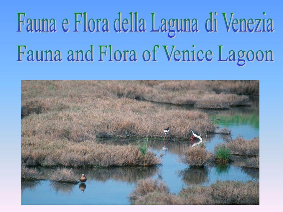 Fauna e Flora della Laguna di Venezia
