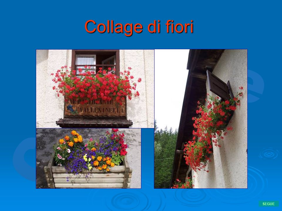Collage di fiori SEGUE