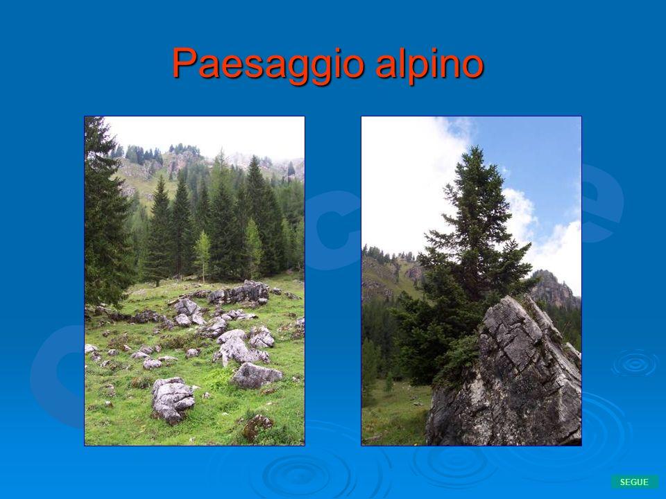 Paesaggio alpino SEGUE