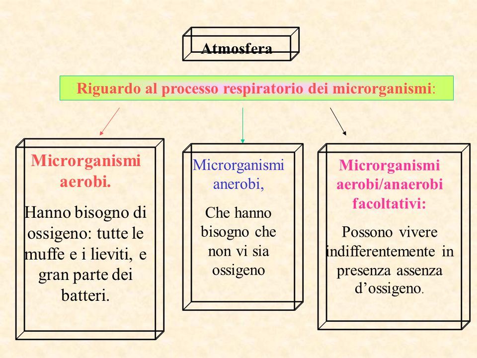 Microrganismi aerobi/anaerobi facoltativi: