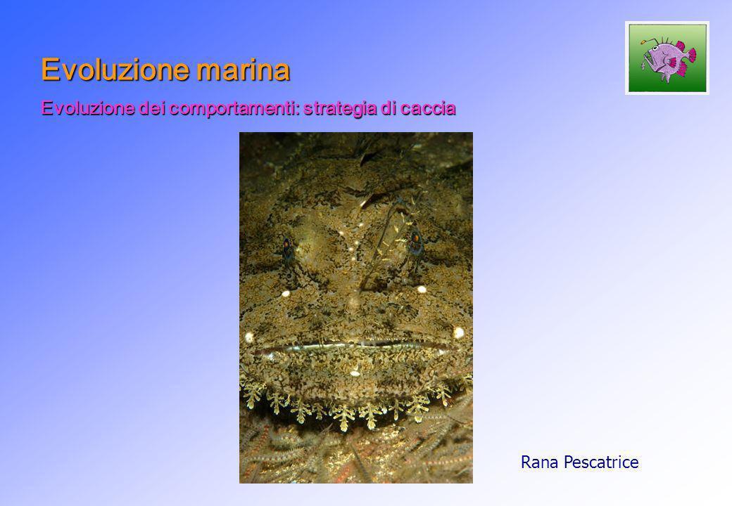 Evoluzione marina Evoluzione dei comportamenti: strategia di caccia