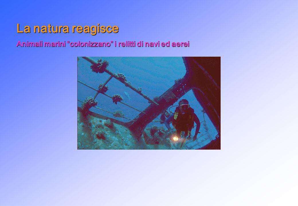 La natura reagisce Animali marini colonizzano i relitti di navi ed aerei