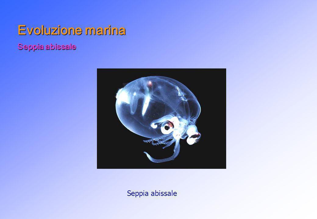 Evoluzione marina Seppia abissale Seppia abissale