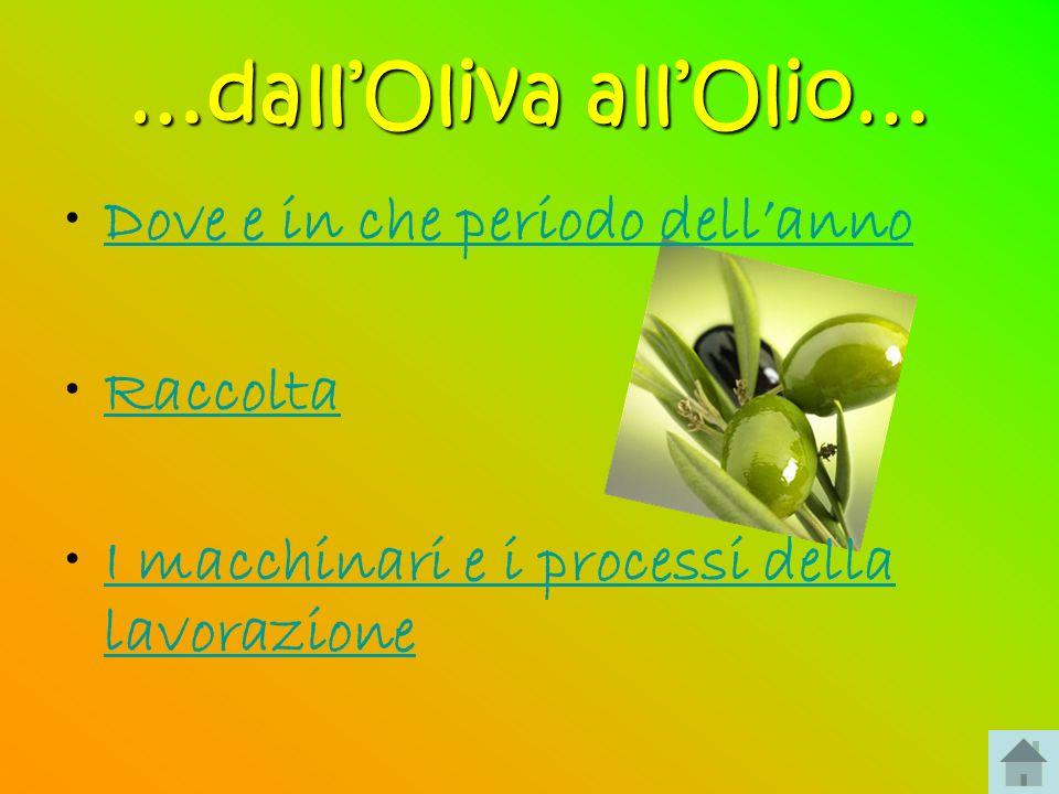 …dall'Oliva all'Olio…