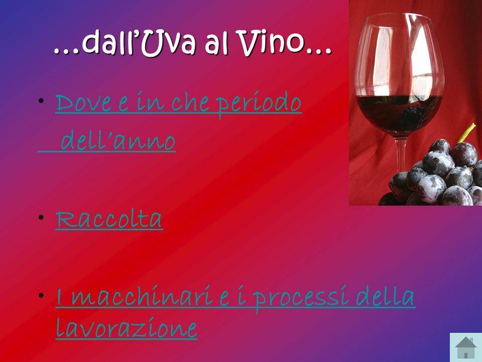 …dall'Uva al Vino… Dove e in che periodo. dell'anno.
