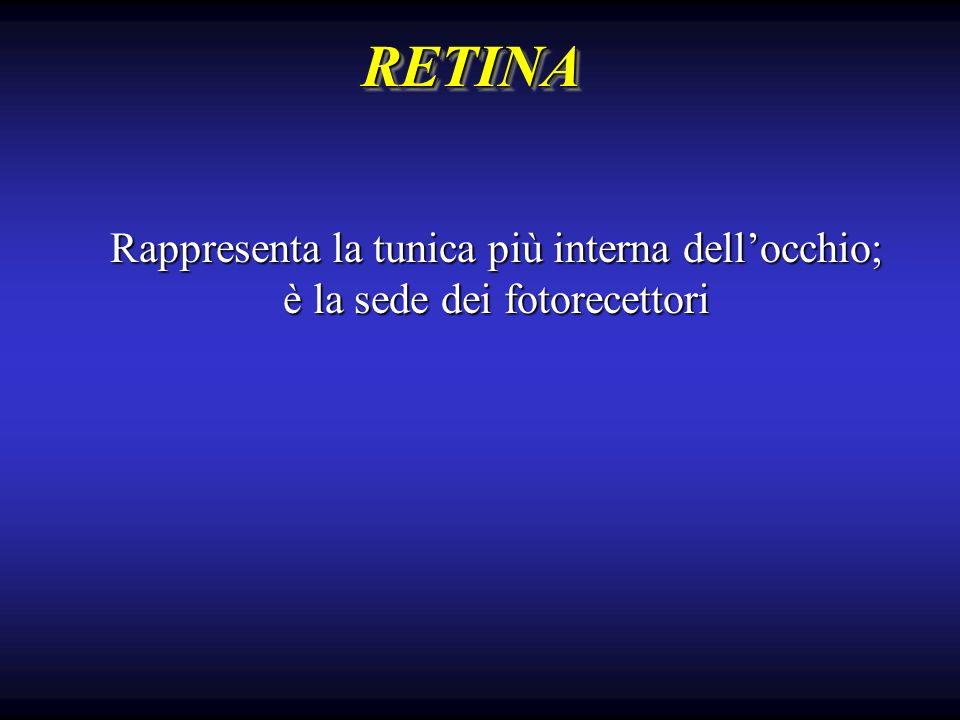 RETINA Rappresenta la tunica più interna dell'occhio;
