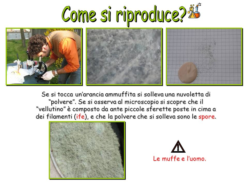 Come si riproduce