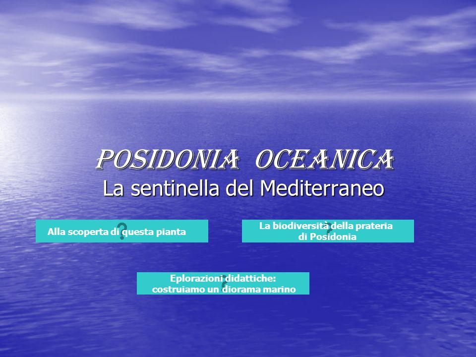 La sentinella del Mediterraneo