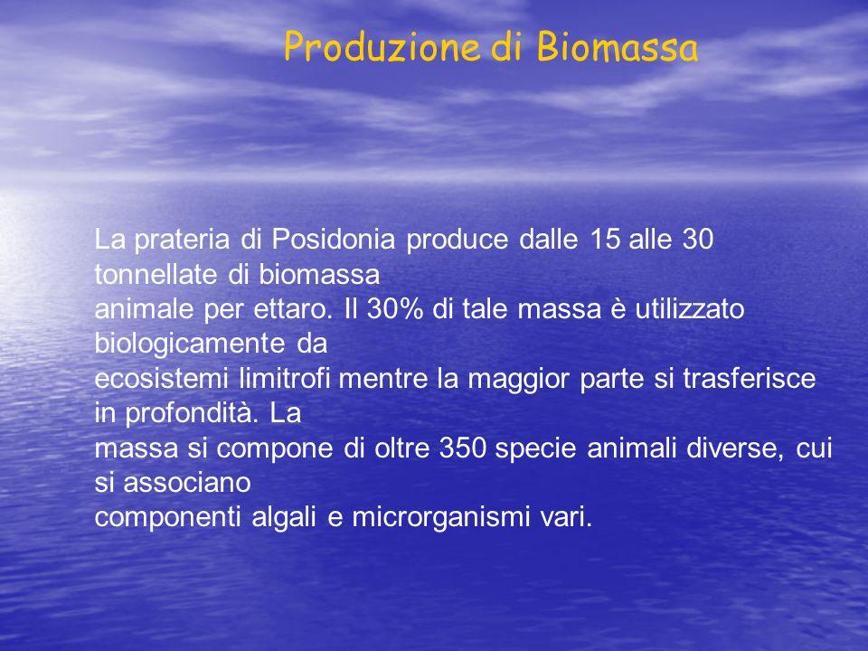 Produzione di Biomassa