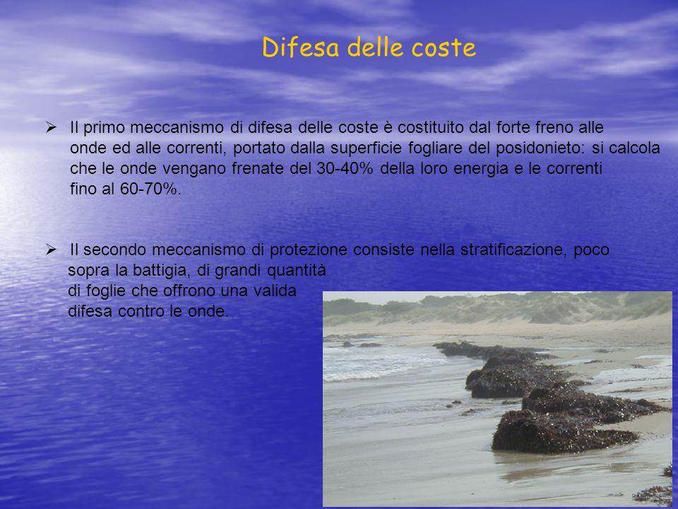 Difesa delle coste Il primo meccanismo di difesa delle coste è costituito dal forte freno alle.